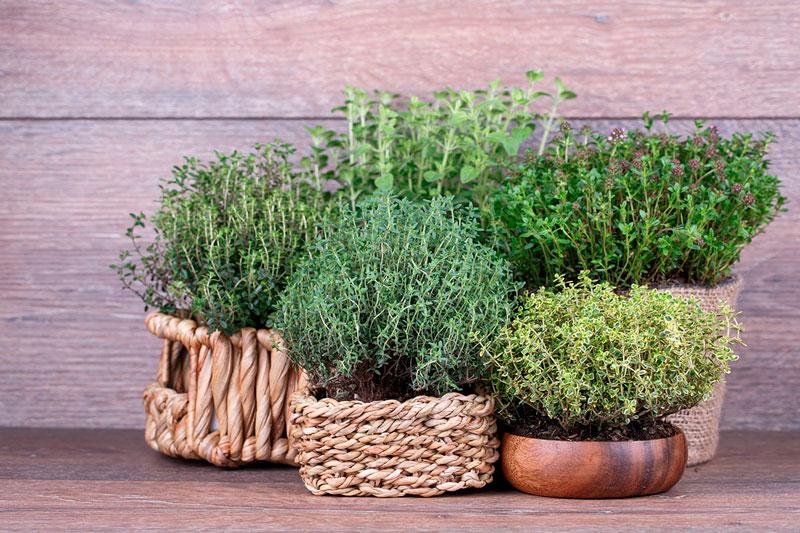 Как выращивать травы на кухне - 10 самых популярных трав в горшках